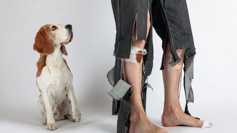 Kenali 6 Penyakit Infeksi Akibat Digigit Anjing